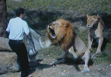 "An image taken from television shows a christoholic being attacked by a lion after he crossed a barbed wire fence to ""preach"" to two of the animals at the Taipei Zoo on Wednesday.   Str / AFP - Getty Images"